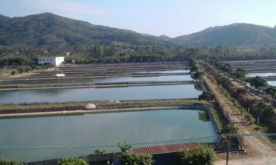 四川虾养殖基地